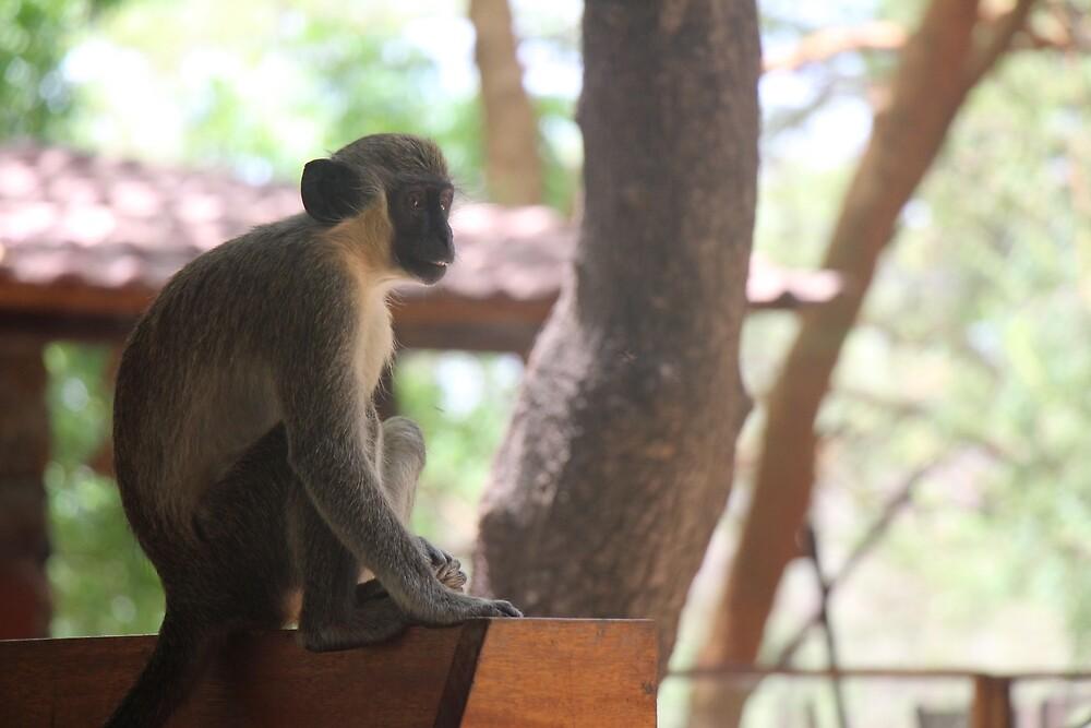 Thoughtful Monkey  by Cpayneloudon85