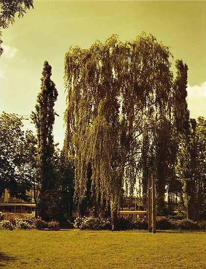 """Tree in a park by Giacomo """"Big Jack"""" Lanzi"""