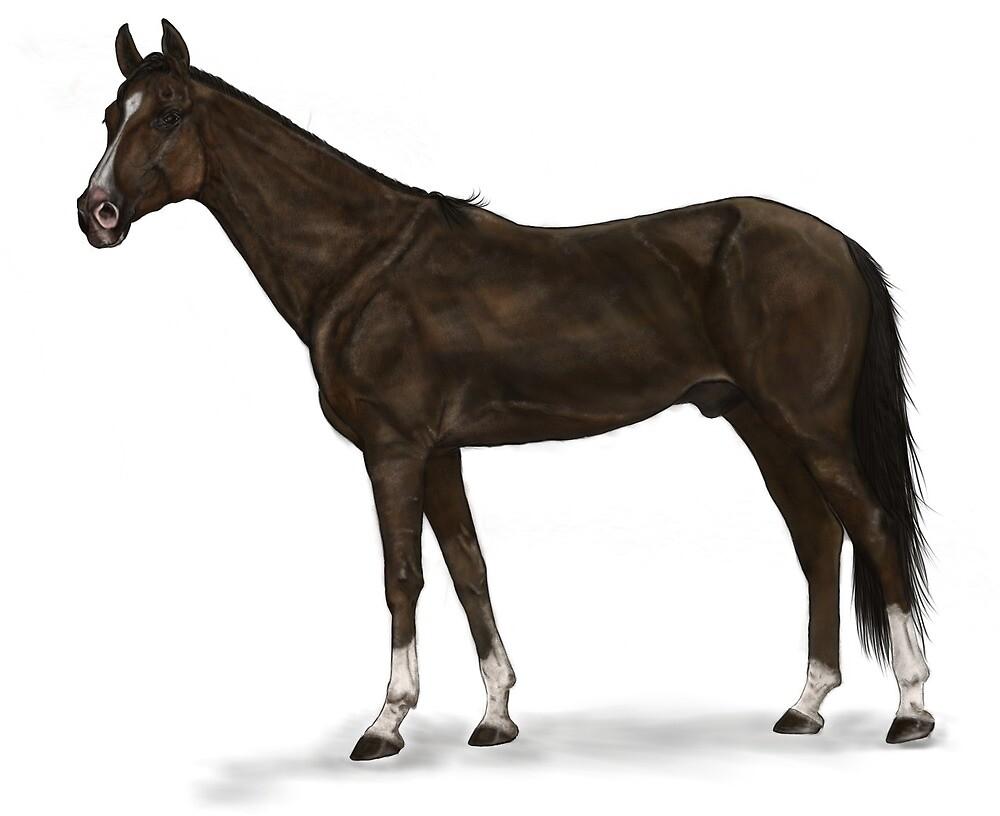 Horse 03 by eleyne