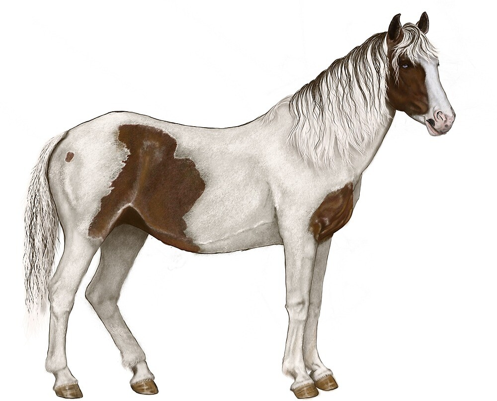 Horse 04 by eleyne