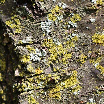 Bark with Lichen by emederart