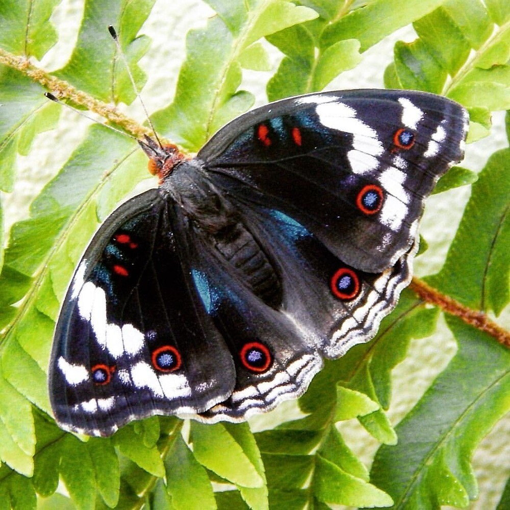 Resting Butterfly  by SybilLeClus