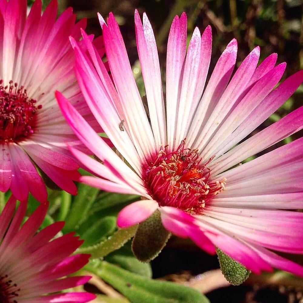 Amazing Succulent Flowers  by SybilLeClus