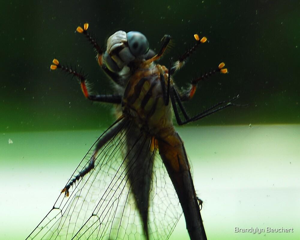 Dragonflies in Love by Brandylyn Beuchert