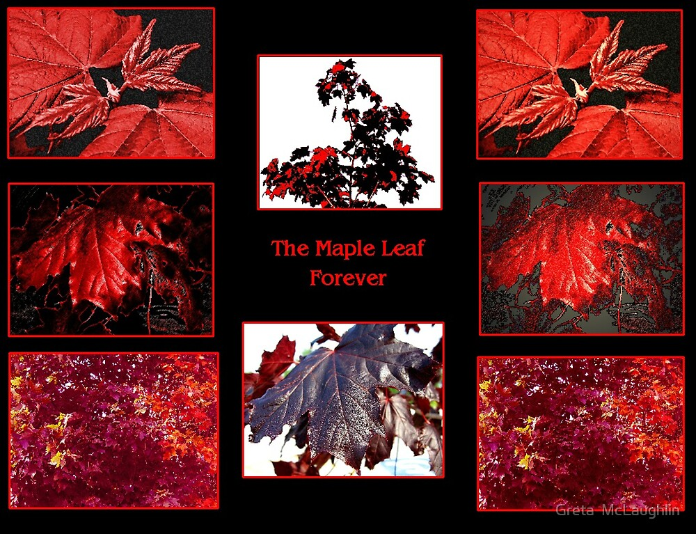 The Maple Leaf Forever by Greta  McLaughlin