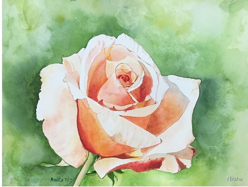 A Peachy Rose in my garden by Nirsha
