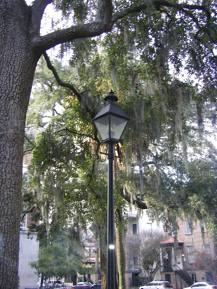 Savannah Georgia Historical Park by derekmccrea