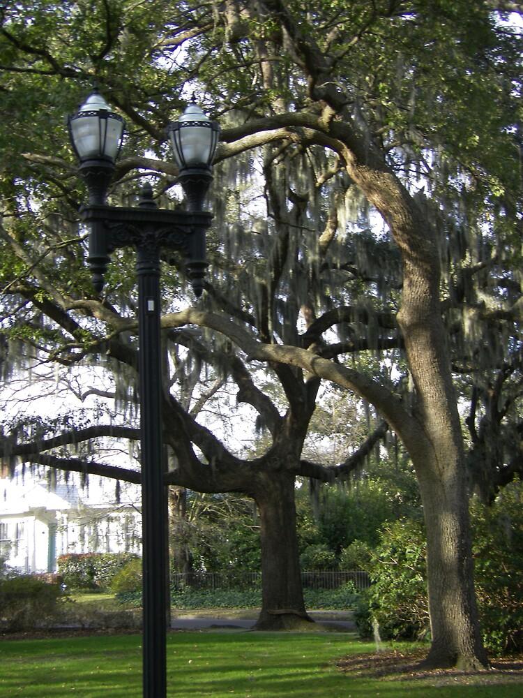 Dual Savannah Park Lights by derekmccrea