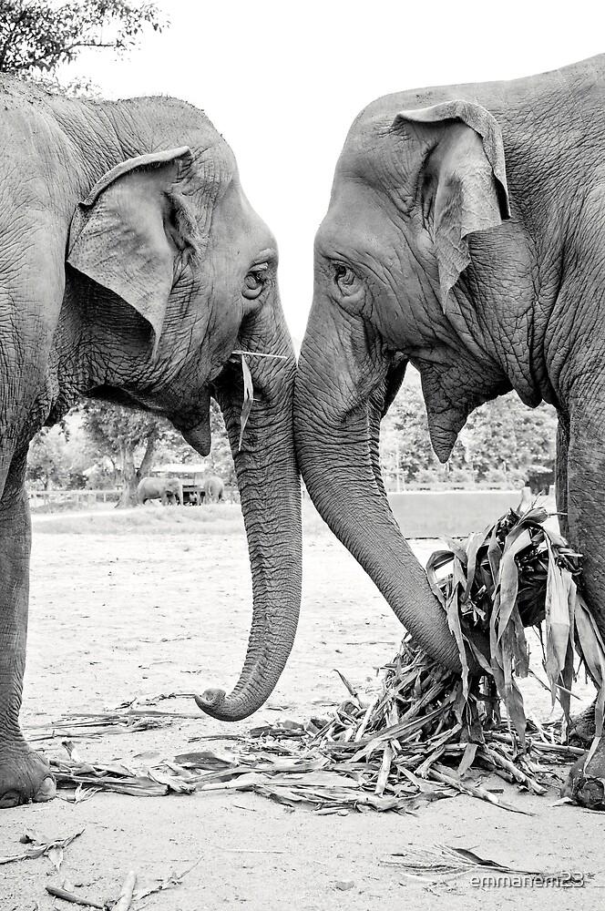 Elephant Love by emmanem23
