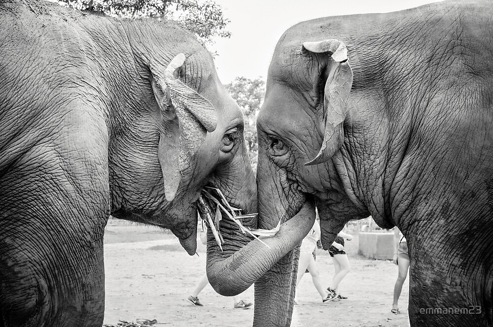 Elephant Hug by emmanem23