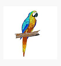 Sitting on a branch parrot Photographic Print