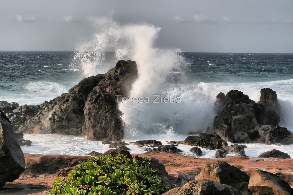 Ho'okipa Beach Wave, Maui, Hawai'i by Teresa Zieba