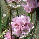 pink treasure by delfinada