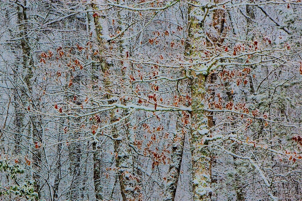 Snow on trees by KSKphotography