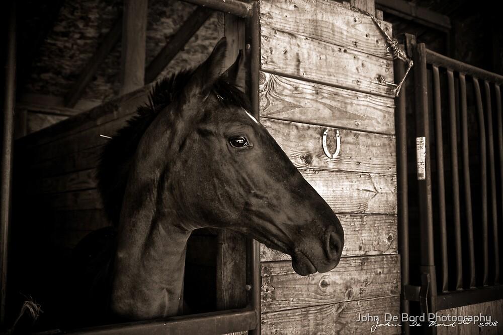The Arabian by John  De Bord Photography