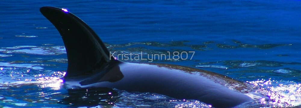 Orca Whale by KristaLynn1807