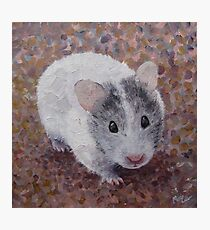 Hamster Cute Syrian Pet Animal Fun Photographic Print