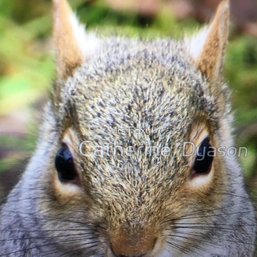 Grey Squirrels Bigger Version by Mrs Foxy