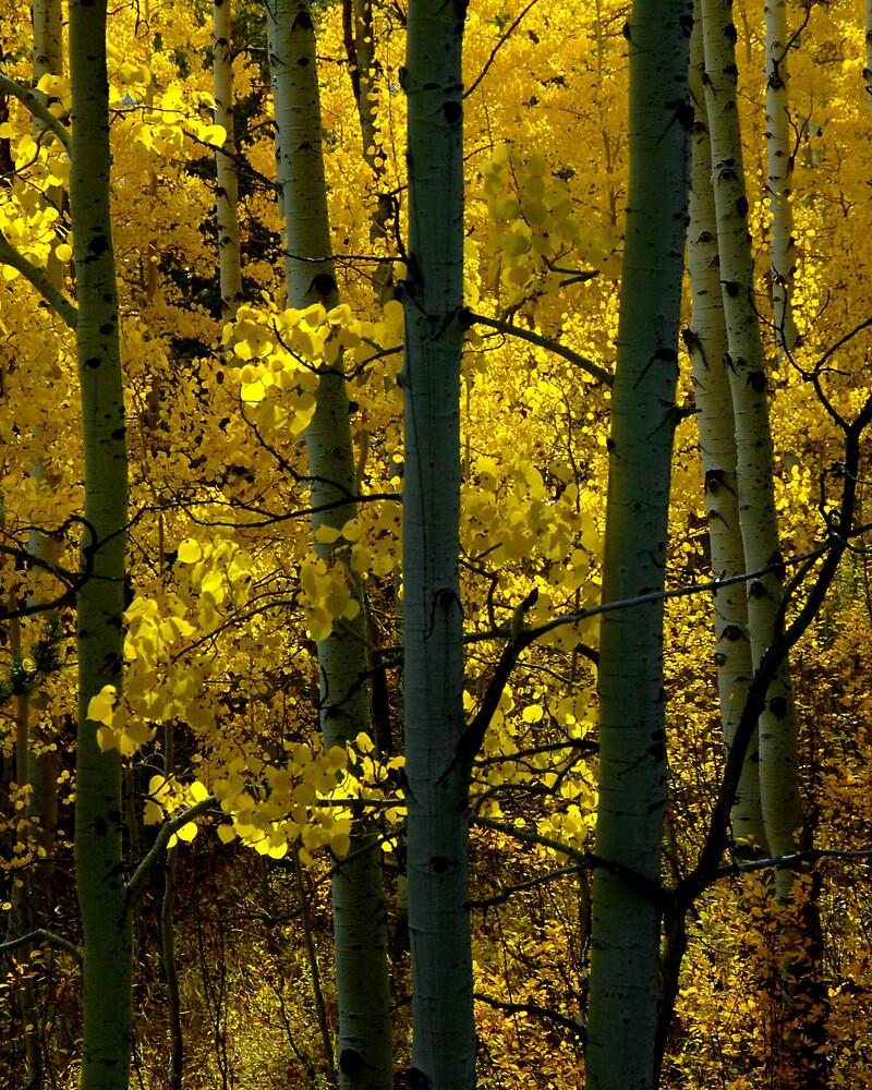 Aspen Gold by GaryGlass