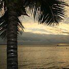 Palm On The Beach by hans p olsen