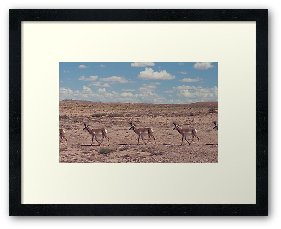 Pronghorn Antelope March by Amber Smith
