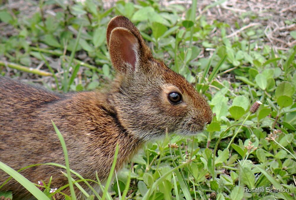 Marsh Rabbits' Mate by Rosalie Scanlon