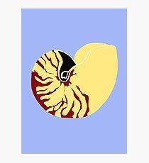 Chambered Nautilus Shell Photographic Print
