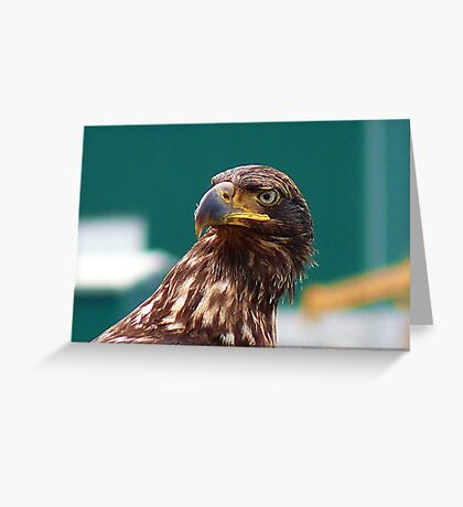 Young Warrior Greeting Card