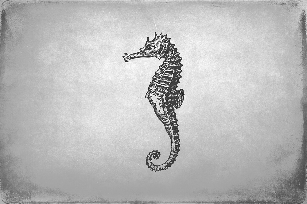 Vintage Seahorse on Gray by Peggy Collins