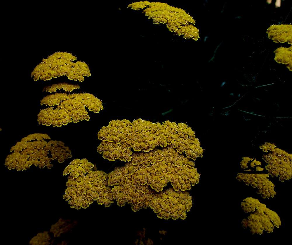 Yellow cushions by Judi Taylor