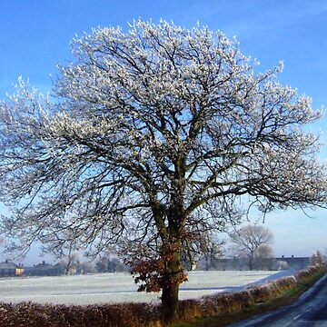 Jack Frost woz 'ere by annthracks