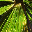 Green and Gold by Catherine Davis