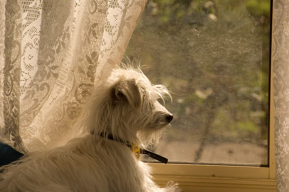 Guard Dog by Ryan Newton