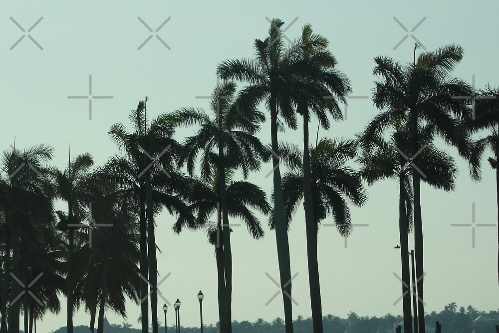 Palm trees by EcstasyPanda