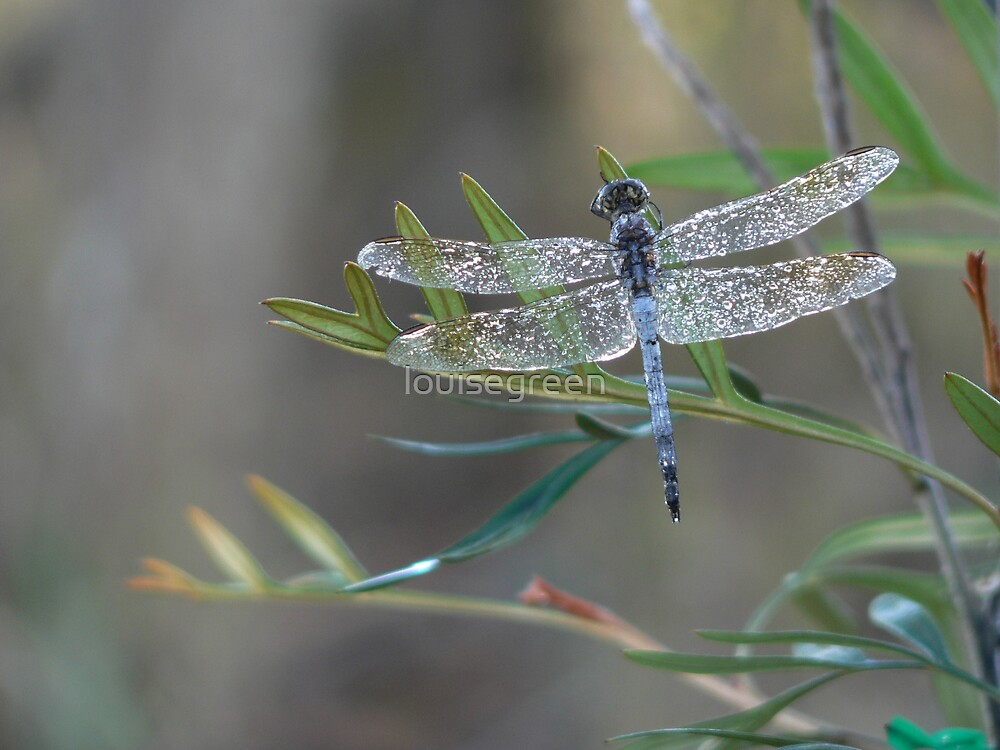 Dragonfly Magic I by louisegreen