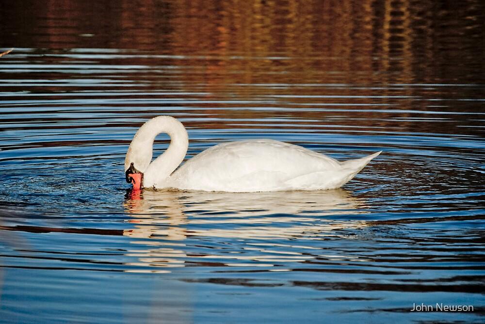 Swan 1 by John Newson