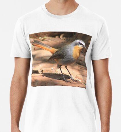 Cape Robin giving me the eye Premium T-Shirt