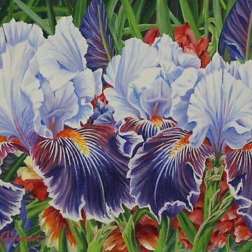 Iris Blooms by janegirardot