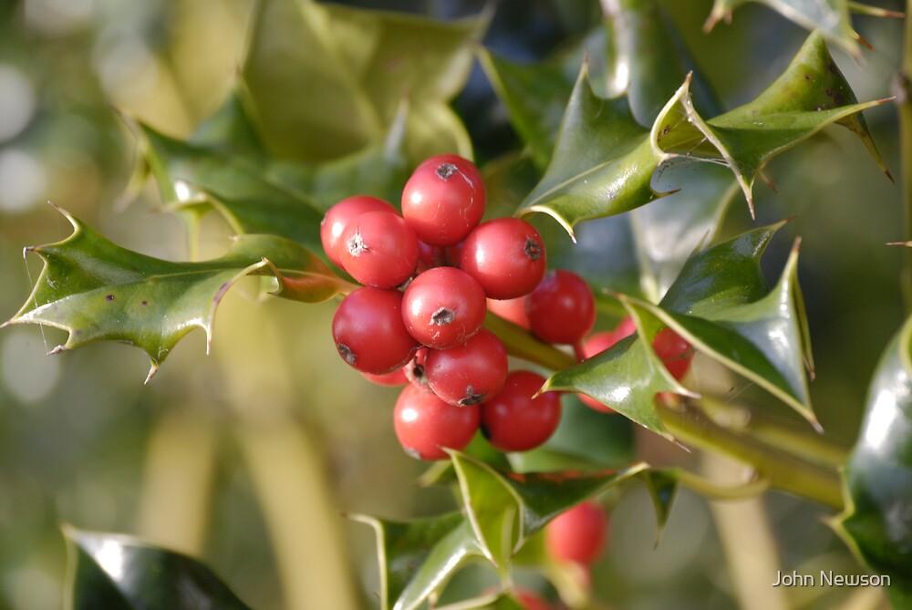 Holly Berrys by John Newson