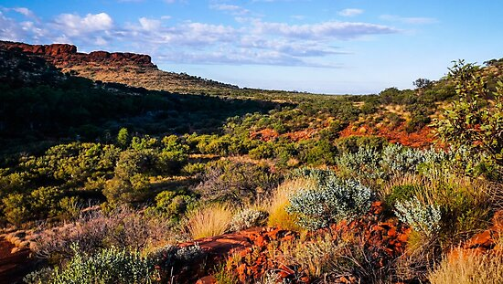 Morning Landscape to the Rim - Kings Canyon - Northern Territory, Australia by Lexa Harpell