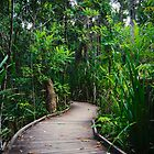 Jungle Boardwalk by Edwin Davis