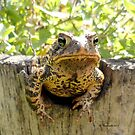 Toad peeking off the side of a garden wine barrel by Barberelli