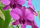Flower by Dave Lloyd