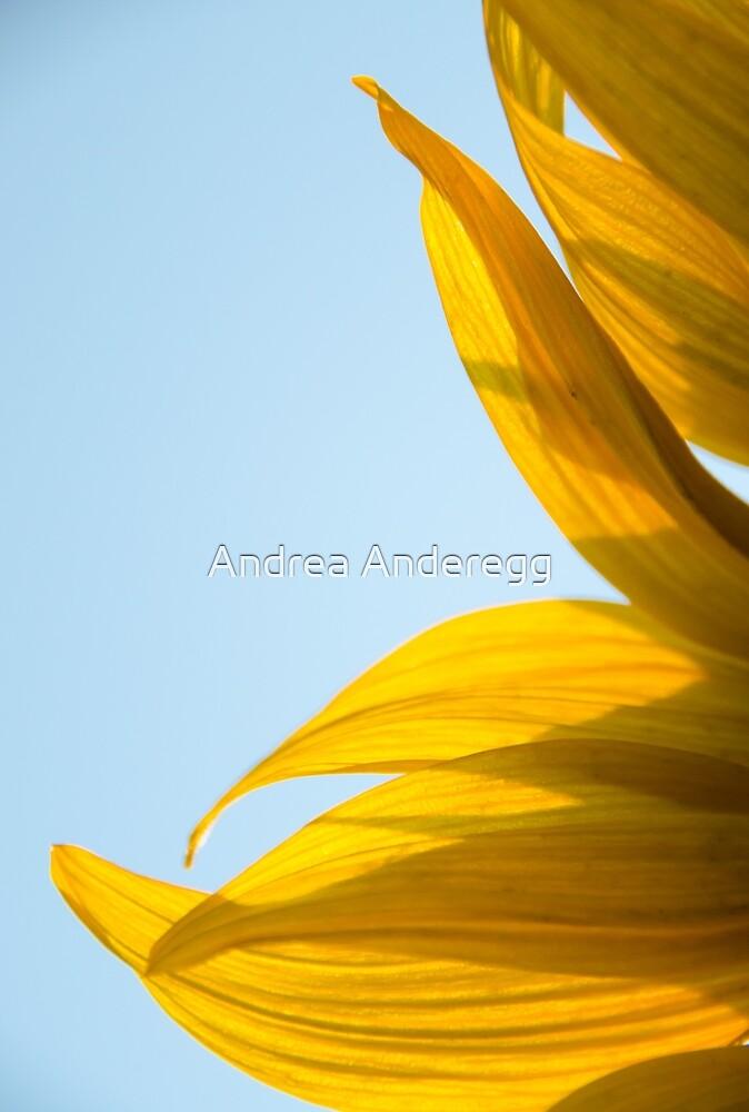Sunflowers 11 by andreaanderegg