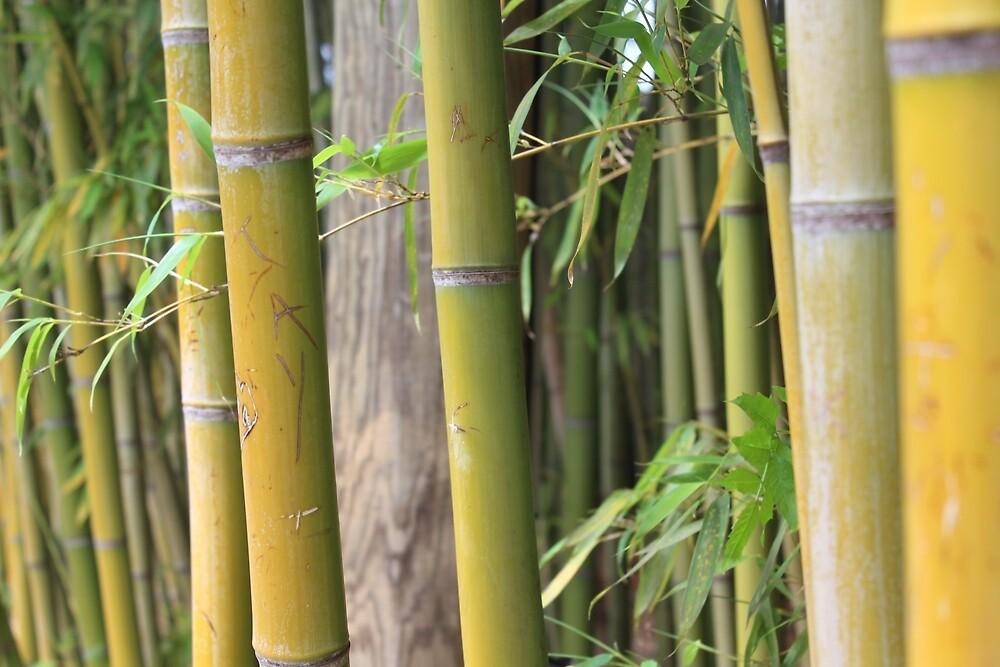 Fresh Bamboo by Grace Jane