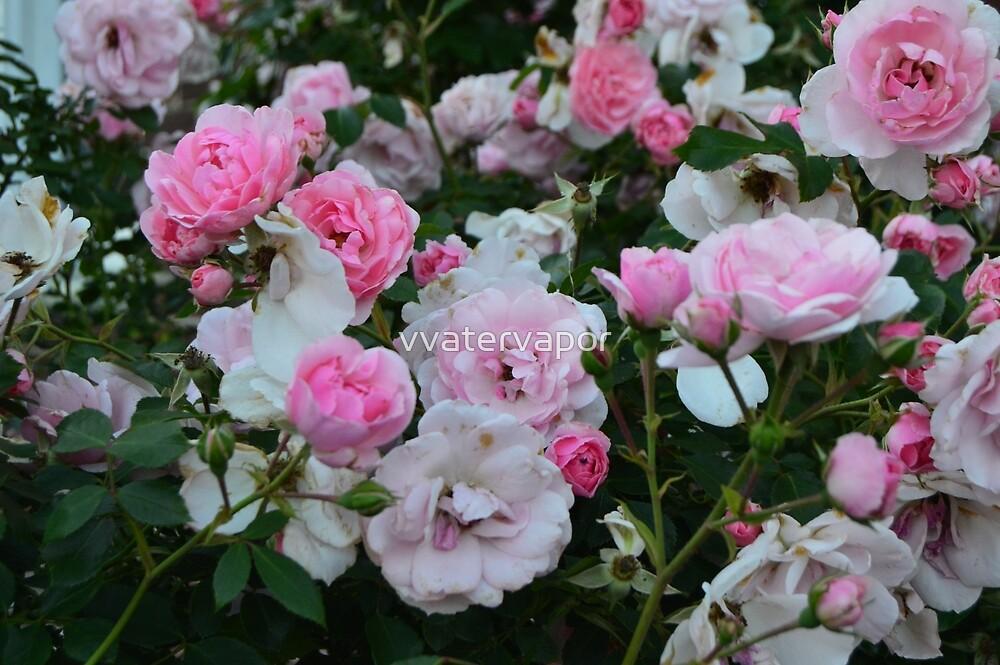 Roses by littleplantleaf