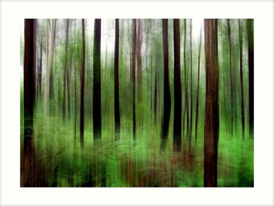 Eucalypts and Bracken by Kitsmumma