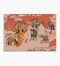 Elephants of the World Photographic Print