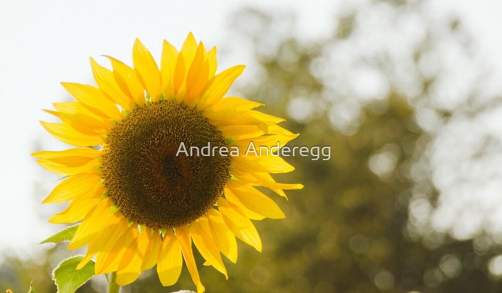 Sunflowers 12 by andreaanderegg