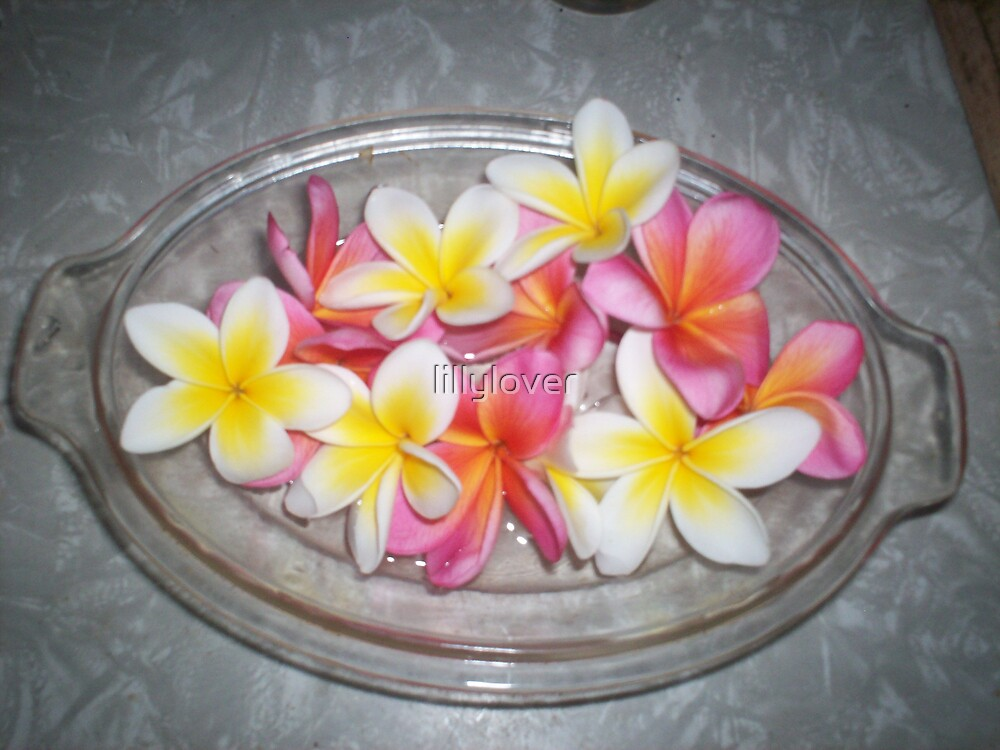 Frangipani by lillylover